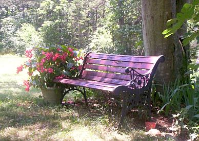 Garden bench with Red Dragon Begonias