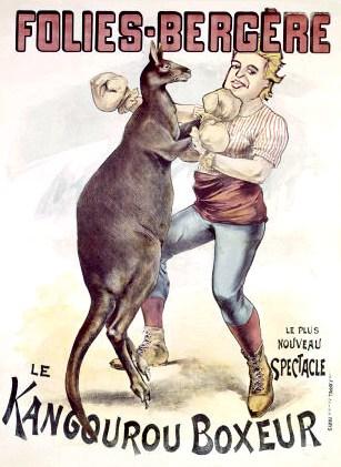 Kangaroo boxer