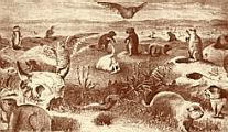 A prairie dog colony
