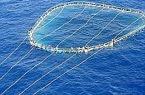 Tuna net refugees 2007