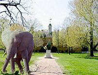 The Elephant at the College of William and Mary