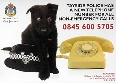 Police hat doggie
