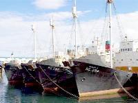 Whaling Ships at Reykjavik